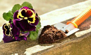 flower with soil on trowel