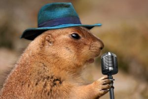 prairie dog microphone