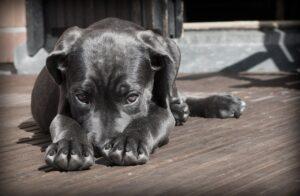 Shy puppy black