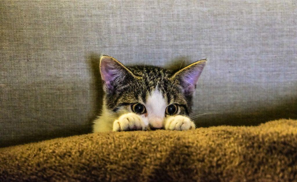 Kitten on Couch