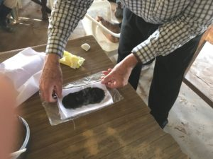 Applying Charcoal Poultice