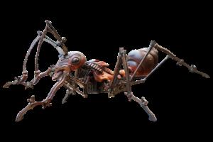 Ant Close up