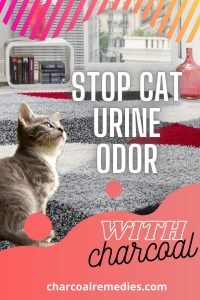 Remove Cat Urine Smell from furniture